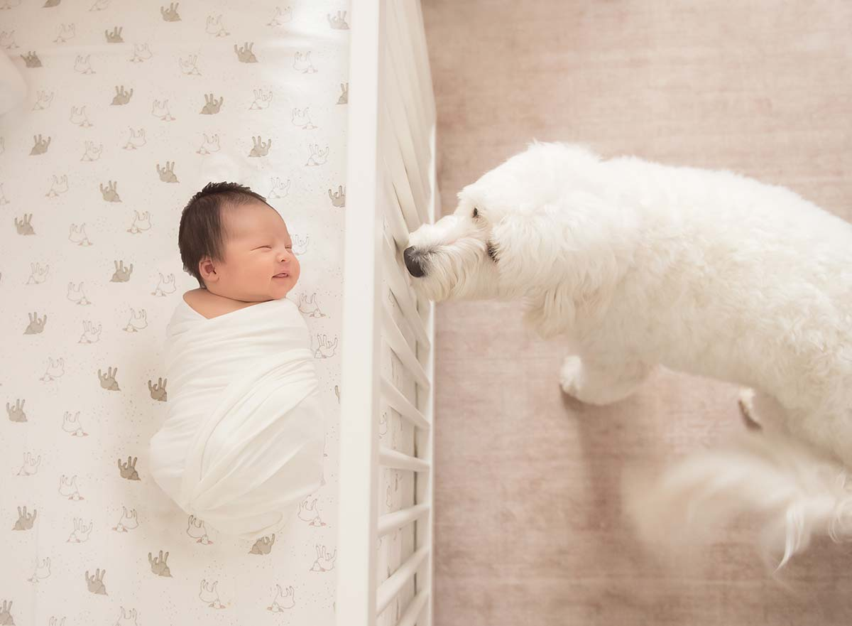 Professional newborn photographer captures a dog forming a bond with a baby