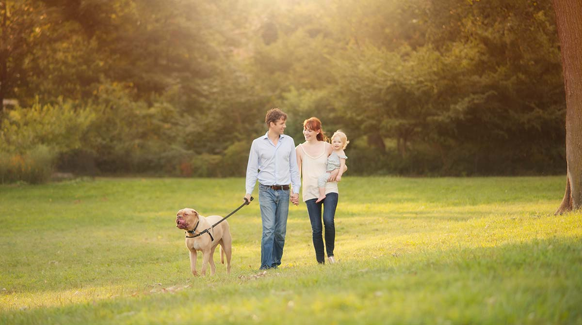 Parents walking their dog with their baby in a park in Stamford Connecticut